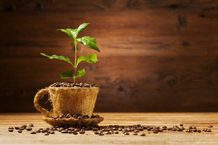 Café issu de l'agriculture biologique
